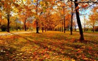 Helpful Hints for Properly Disposing of Leaves