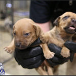 Rusk County dogs seized